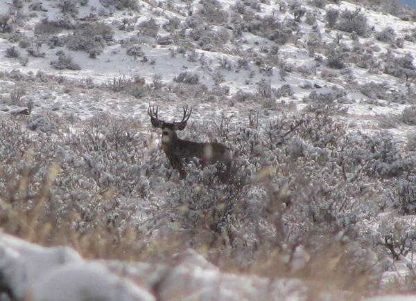 deer_hunt_2010_026